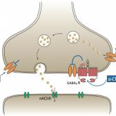 פגיעת קרינה אלקטרומגנטית בגוף ביולוגי - הסבר מנגנון פיזיקלי